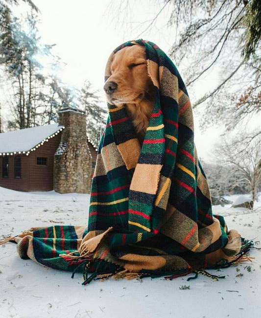 Собачье ожидание