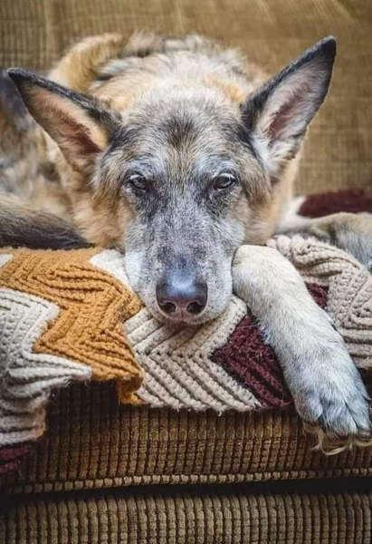 Когда стареет твоя собака